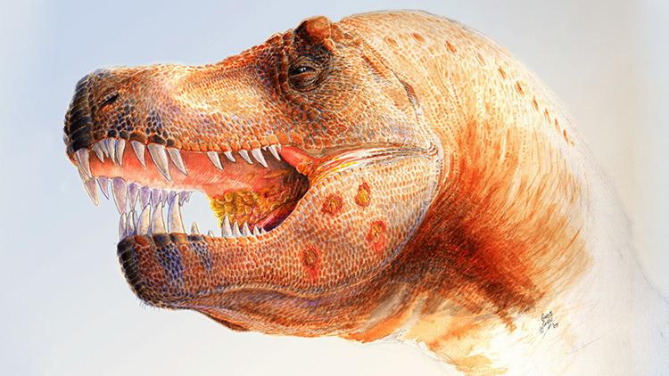 Hallan el fósil de un nuevo dinosaurio jurásico, uno de los más antiguos del mundo