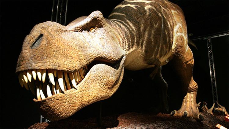 ¿Inmimente resurrección?: Hallan restos de sangre de dinosaurio de hace 75 millones de años