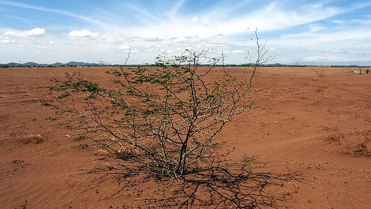 Estudio: El calentamiento global puede convertir a los árboles en armas