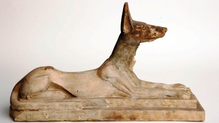 'Jauría' de momias en Egipto: Hallan 8 millones de perros momificados en una fosa