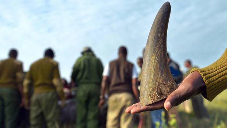 Descubra la tecnología avanzada que ayudará frenar la caza furtiva de rinocerontes