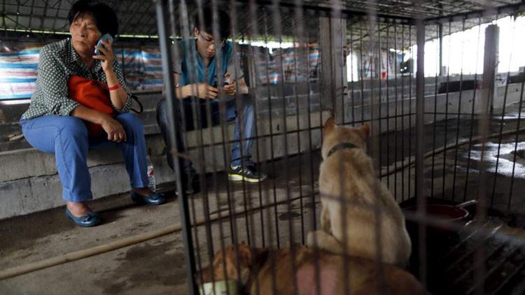 Una china paga para evitar que un centenar de perros sean masacrados en un festival