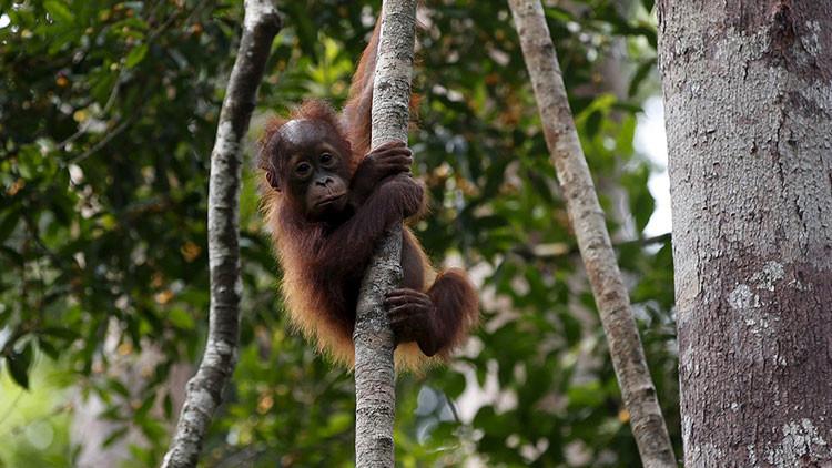 ¿Cómo prevenir la sexta extinción masiva que amenaza a nuestro planeta?