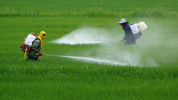 OMS: La pesticida más popular puede causar cáncer en humanos