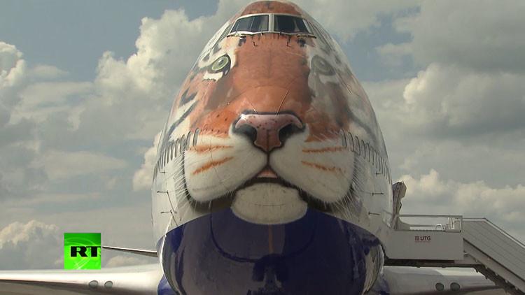 'Tigreavión': una aerolínea rusa decora un avión como un tigre para salvarlo de la extinción
