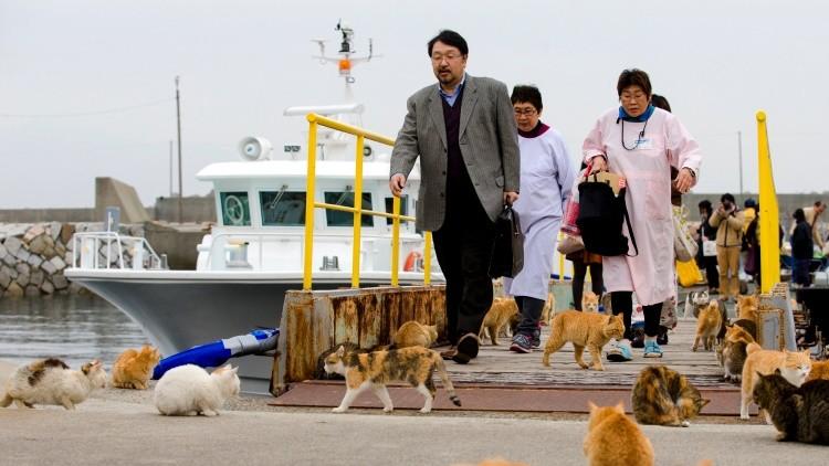 Isla de gatos en Japón