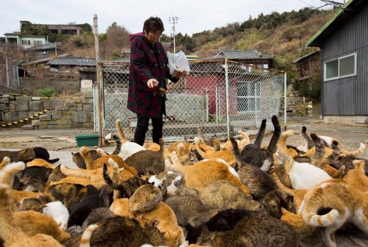 La isla de gatos en Japón