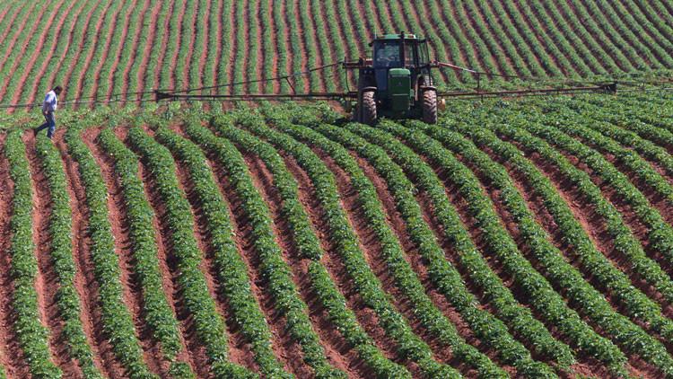 """Alfileres en patatas: agricultores canadienses hacen frente al """"terrorismo alimentario"""""""