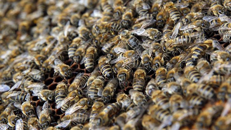 Miles de abejas 'atacan' un avión en un aeropuerto de Moscú  (fotos)
