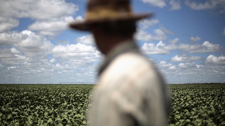 Autosuficiencia total: América Latina y el Caribe podrían dejar de importar alimentos