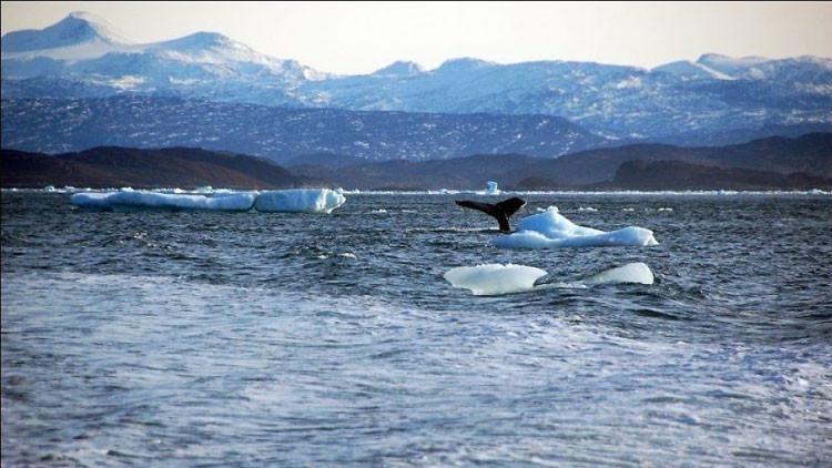 """""""Alto peligro"""": Nivel del mar podría aumentar más de tres metros en medio siglo"""