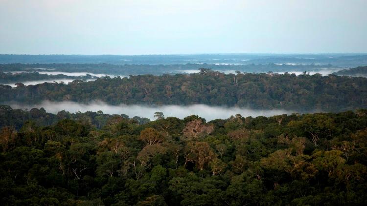 Amazonia poblada y floreciente: Desvelan el mito de las prístinas selvas amazónicas