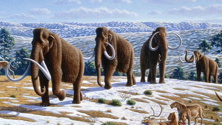 El calentamiento global acabó con los mamuts y no el frío, según un estudio