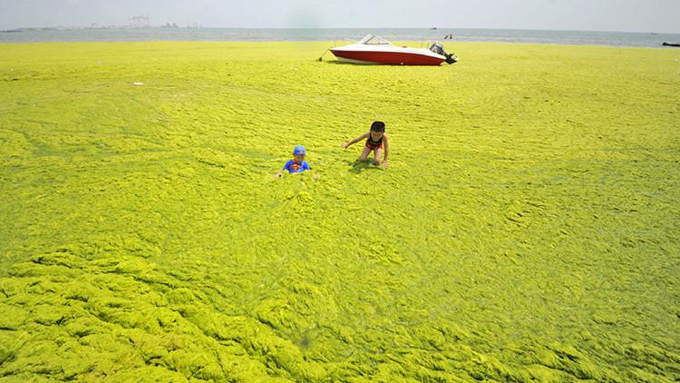 'Mar verde': Así es la extraña playa de China que cada verano se llena de algas (Fotos)