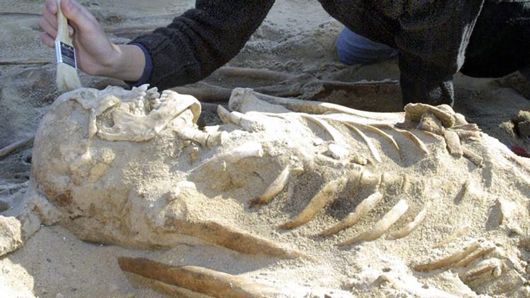 Esqueletos de soldados de Napoleón hallados en Lituania mostraron signos de inanición