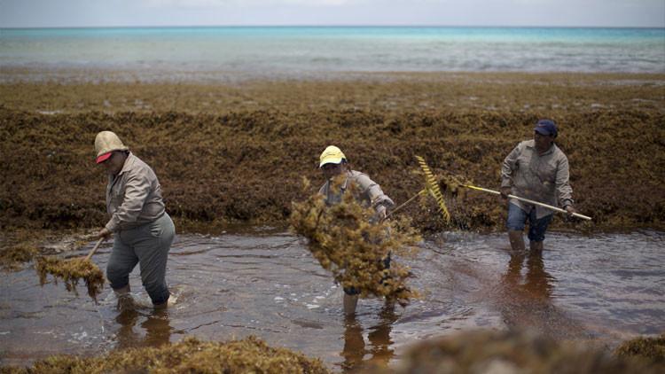 Fotos: El uso de pesticidas en EE.UU. fomenta las algas y ahuyenta al turismo en Cancún