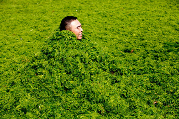 'Mar verde': Así es la extraña playa de China que cada verano se llena de algas (Foto)