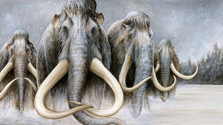 "Científicos: Revivir a un mamut es ""inevitable"""