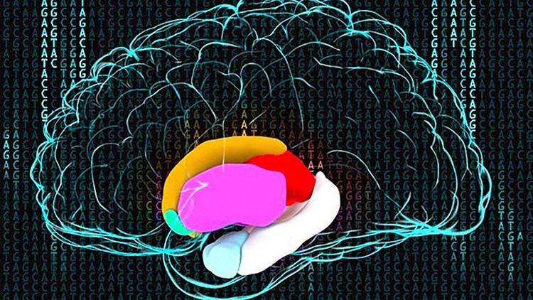 La pobreza ralentiza el desarrollo de materia gris en el cerebro de los niños