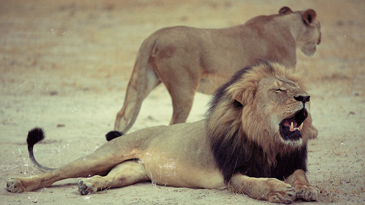 ¿Y los migrantes?: Cómo la muerte del león Cecil esclipsó las noticias de la semana