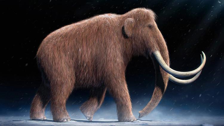 Confirman que fue un objeto cósmico que acabó con los mamuts