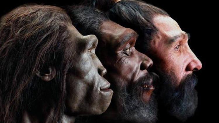 Científicos españoles descubren cuándo apareció el rostro humano