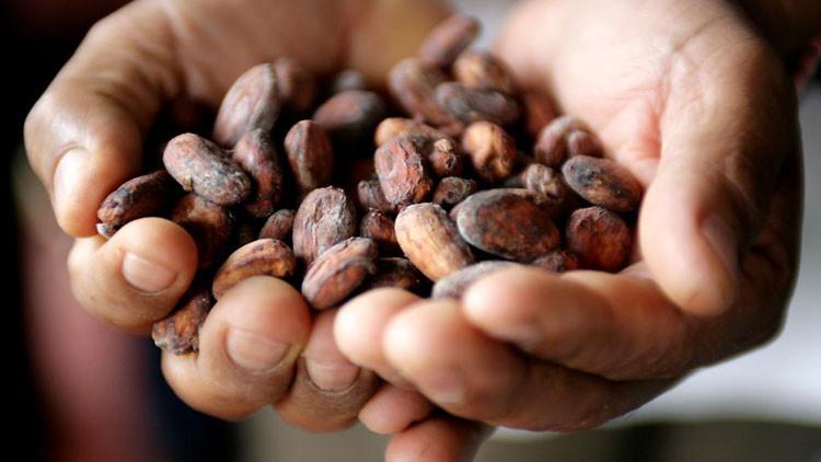Acata: La historia del pueblo colombiano que sobrevive tras cambiar coca por cacao