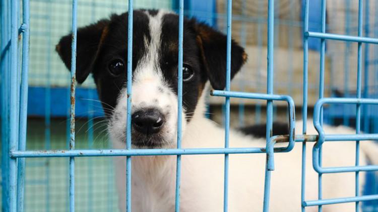"""""""Como si fuera un saco de basura"""": el maltrato de un perro causa indignación en las redes"""