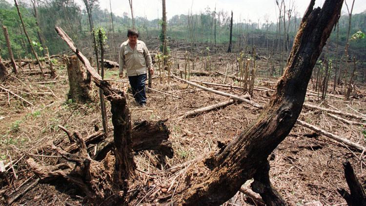 Investigadores mexicanos crean un método revolucionario para combatir la deforestación