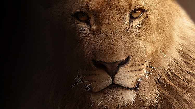 ¿Por qué la muerte de un león vale más que la de 100 personas?