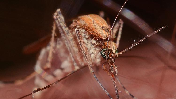 El nuevo gigante Alphabet investigará para crear mosquitos mutantes