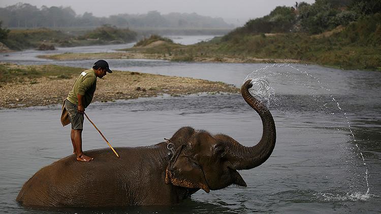 Si los turistas supieran como maltratan a los elefantes en la India, no se subirían a ellos
