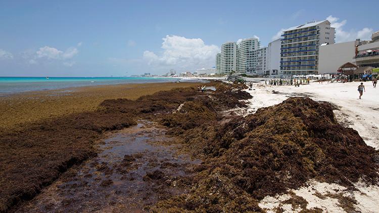 Fotos: Invasión de algas afecta a paradisíacas playas del Caribe