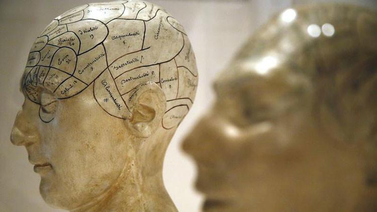 Revelan la principal diferencia entre los cerebros masculinos y femeninos