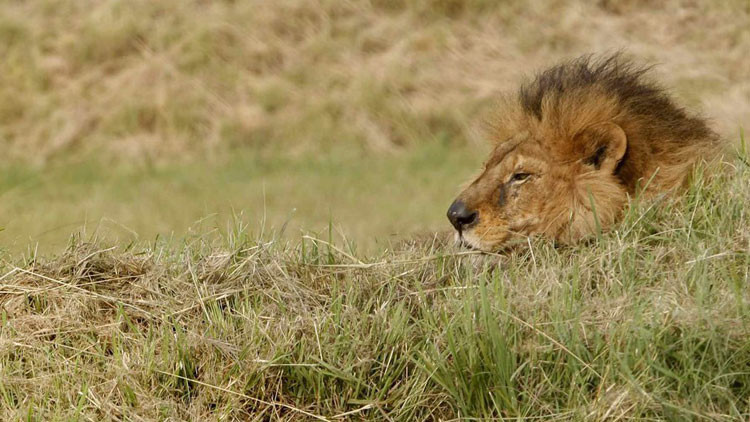 """Foto: Un niño de 7 años con """"su primer león"""" cazado en África desatan la indignación en la Red"""