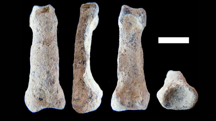 Descubren un hueso de homínido que podría cambiar las teorías de la evolución humana