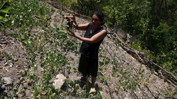 Honduras, al borde de una hambruna a causa de El Niño