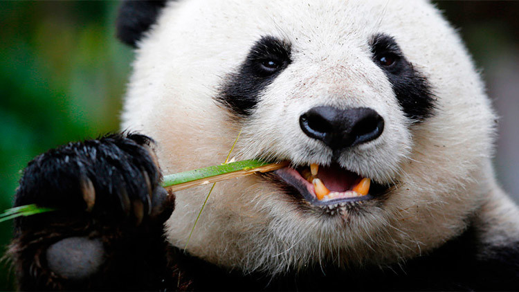 #ChinaSeDerrite: Internautas combaten con humor el pánico bursátil del lunes negro