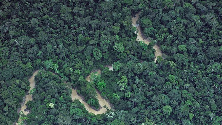 Cuenta atrás: Para el 2050 la Tierra perderá el área de bosques del tamaño de la India