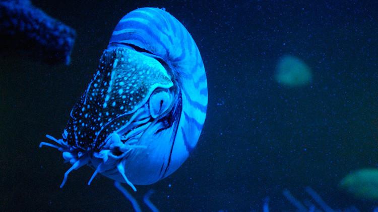 Uno de los animales más raros del planeta reaparece por primera vez en 30 años