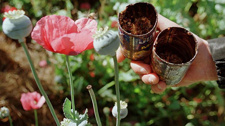 México produce más opio para satisfacer la creciente demanda de heroína en EE.UU.