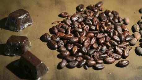 Amazonia en peligro de desaparición por la obsesión mundial de chocolate