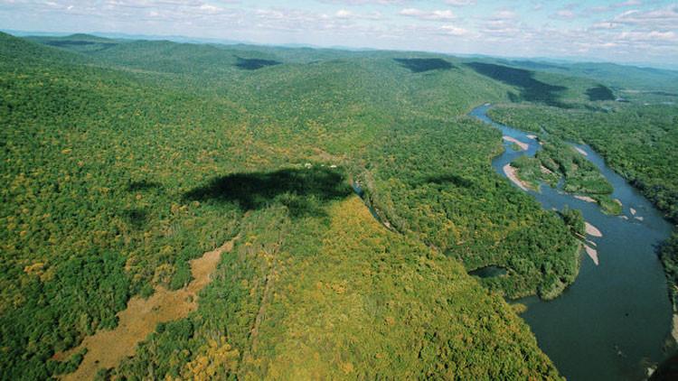 ¿Qué país de América Latina cuenta con el mayor número de árboles del planeta?
