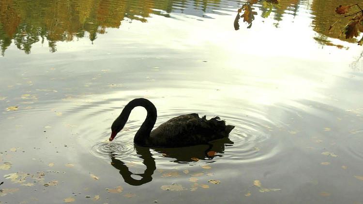 """El autor de la teoría del 'cisne negro': """"Prefiero invertir en Rusia porque ya pasó por el infierno"""""""