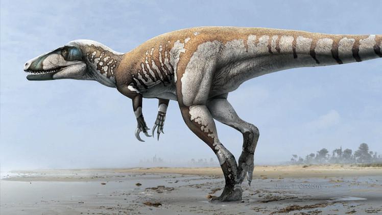 Australia descubre a su mayor dinosaurio carnívoro