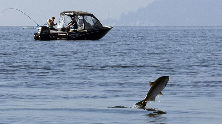 Datos alarmantes: Los peces están desapareciendo de los océanos
