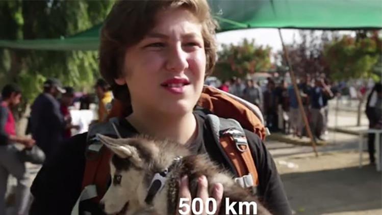 Video: un joven refugiado sirio recorre 500 km con su perro para llegar a Europa