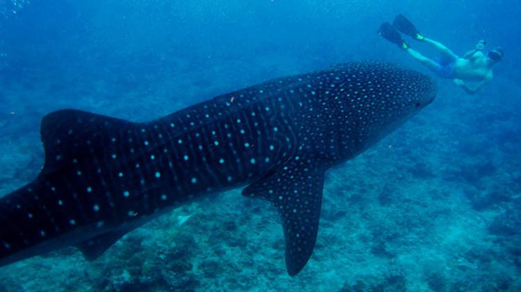 En 2015 ha muerto más gente tomándose un 'selfie' que por ataques de tiburones