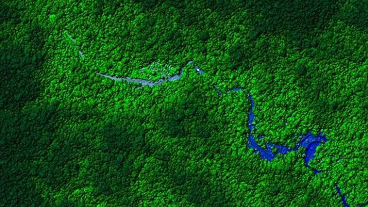 La selva hondureña