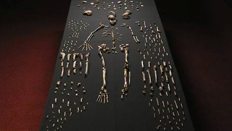 Anuncian el descubrimiento de una especie humana: Homo naledi